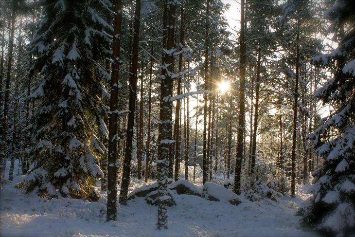 Skogsbruk på Revelsta